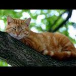 Дитяча пісенька про котика